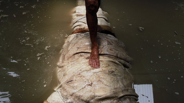 A man walks across a vat of water used to wash the hide. (Photo by Rezza Estily/JG Photo)