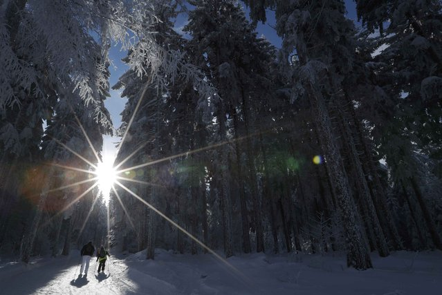 A group of cross-country skiers enjoy a cold and sunny winter's day at the Champ du Feu near Strasbourg, France, January 16, 2017. (Photo by Christian Hartmann/Reuters)