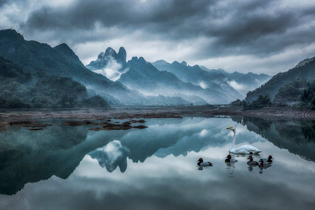 Swans and ducks add a further element of tranquility to an already peaceful scene shot by Jichang Liu in China. (Photo by Jichang Liu/Travel Photographer of the Year)