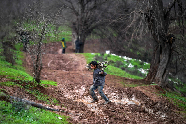 A Syrian boy carries back collected firewood as he returns to a camp for the displaced near Dayr Ballut in the northwest of Aleppo province on January 2, 2019. (Photo by Rami Al Sayed/AFP Photo)