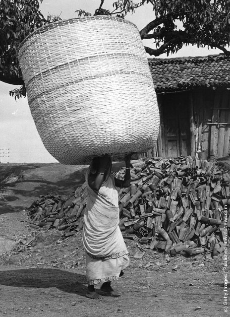 1955: An Indian woman carrying a large basket on her head, passing a large pile of roof tiles
