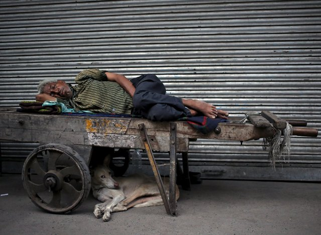 A man sleeps on a handcart as a stray dog rests along the roadside during early morning in the old quarters of Delhi, India, July 2, 2015. (Photo by Anindito Mukherjee/Reuters)