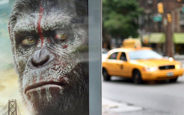 """A New York City taxi passes by a movie poster on a bus stop of """"Dawn of the Planet of the Apes"""" on July 14,2014. The  20th Century Fox sequel jolted the weekend box office with $73 million. The movie is the sequal to the  2011's """"Rise of the Planet of the Apes"""". (Photo by Timothy A. Clary/AFP Photo)"""