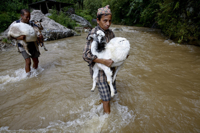 Local villager carry their goats as they crossing Sindhu river in Kaule Dovan in Sindhupalchwok district, Nepal, 18 August 2015. Villagers and transportation are facing difficulties for their daily travel as river level is rises due to continues rainfall  in Nepal. (Photo by Narendra Shrestha/EPA)