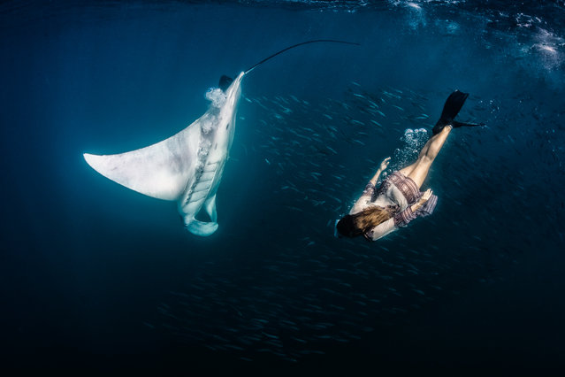 Model, skydiver and wing-suit jumper Roberta Mancino, 33, swims with manta ray on February 2013 in Isla Mujeres, Mexico. A female skydiver swims with whale sharks, manta rays and sailfish – the fastest fish in the sea. Model, skydiver and wing-suit jumper Roberta Mancino, 33, jumped from a boat into the ocean surrounding Isla Mujeres near the northern Peninsula of Mexico. The incredible project involved two trips to the stormy winter seas – one in February 2013 and one a year later in February 2014. (Photo by Shawn Heinrichs/Barcroft Media)