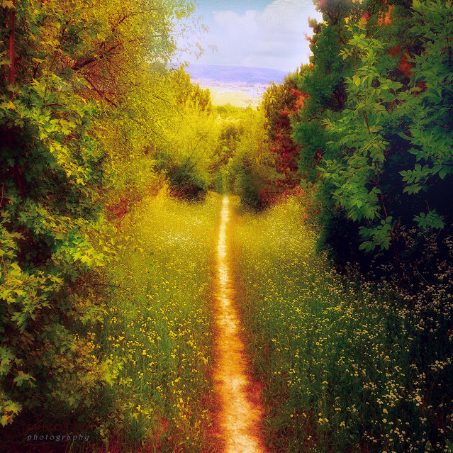 Path to the civilization. (Ildiko Neer)