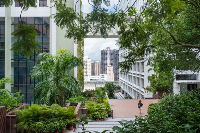 Winner, Greening the City category. Hong Kong, China. (Photo by Annie Green-Armytage/The Guardian)