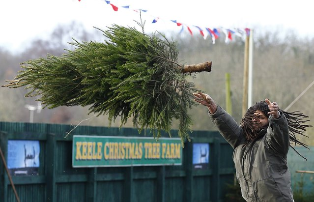 A competitor throws during the UK Christmas Tree Throwing Championships in Keele, central England, November 30, 2014. Participants taking part in the charity event must throw a 6 ft (1.8 m) tree, weighing about 10 kg (22 pounds), as far as possible and get the tree as high over a bar as they can. (Photo by Darren Staples/Reuters)