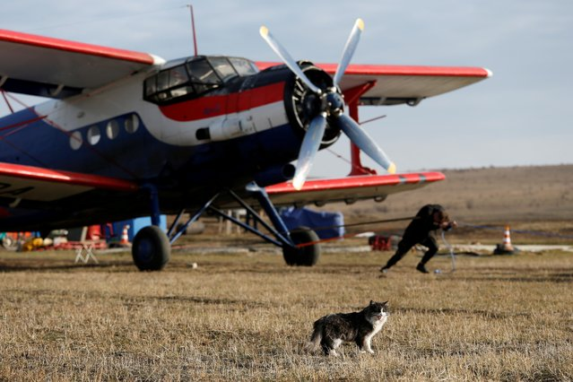Trialist Pavel Prikhodko attempts to pull an An-2 plane as a cat walks nearby during a charity event near the village of Tatarka in Stavropol Region, Russia on December 27, 2020. (Photo by Eduard Korniyenko/Reuters)