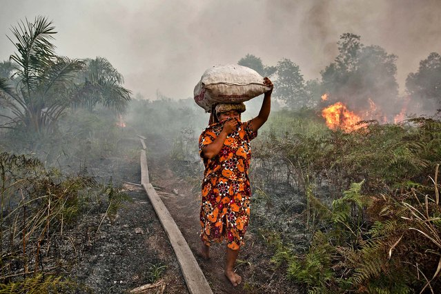 A woman walks trough haze as a forest fire burns in Siak Regency, Riau Province, Indonesia, on June 27, 2013. The fires on Sumatra have caused record smog in Malaysia and Singapore. Eight farmers have been arrested for setting the fires on Sumatra Island. (Photo by Ulet Ifansasti/Getty Images)