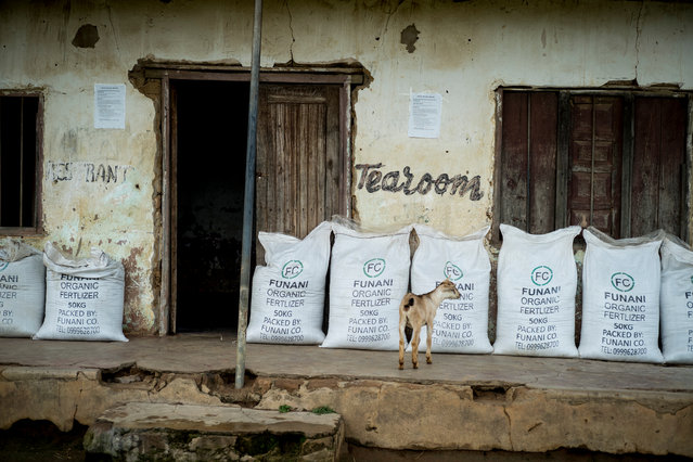 A former tea room with bags of fertiliser on sale outside. (Photo by David Levene/The Guardian)