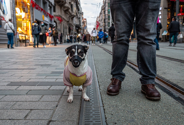 A dog is seen wearing mask as a preventive measure against Covid19 is seen during curfew in Istanbul, Turkey on March 7, 2021. Curfew is enforced full day on sundays in Istanbul following Turkey President, Recep Tayyip Erdoğan's statement on coronavirus. (Photo by Tunahan Turhan/Sopa Images/Rex Features/Shutterstock)