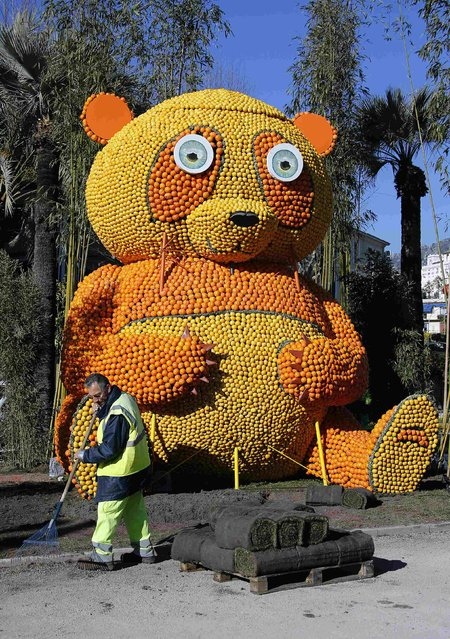 A gardener sweeps near a giant panda made with lemons and oranges during the 82th Lemon festival in Menton February 12, 2015. (Photo by Eric Gaillard/Reuters)