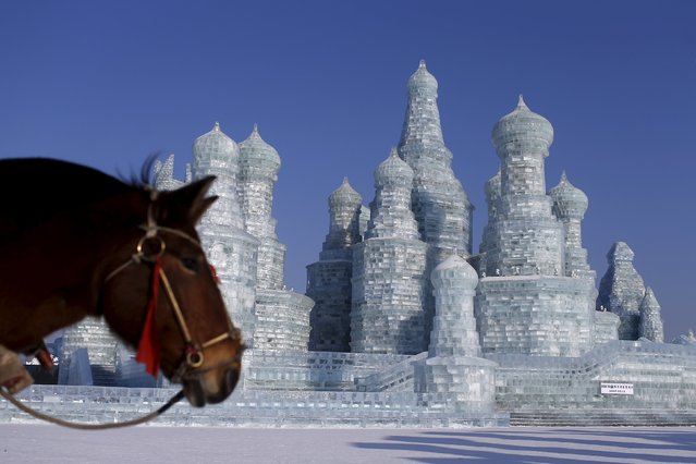 A horse stands in front of ice sculptures ahead of the Harbin International Ice and Snow Festival in the northern city of Harbin, Heilongjiang province, January 4, 2016. (Photo by Aly Song/Reuters)