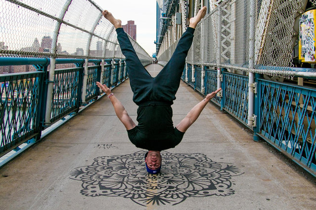 Yoga head stand, Brooklyn, New York. (Photo by Kristina Kashtanova/Caters News)