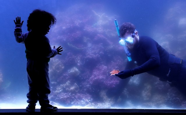 Aquarist Jeremy Simmons is watched by Marcelo Noone-Taylor as he plants corals rescued from illegal trading, in a seven-metre-long reef tank ahead of ZSL London Zoo's reopening of indoor exhibits in London, Britain, May 16, 2021. (Photo by Peter Nicholls/Reuters)