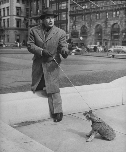 Actor John Boles pulling & coaxing his stubborn schnauzer puppy to leap over concrete curb on street. (Photo by Nina Leen/Pix Inc./The LIFE Picture Collection/Getty Images)
