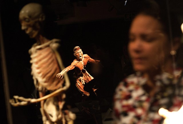 A visitor attends the New Body Worlds Vital Exhibition at the Sci Bono Centre in Newtown, Johannesburg, South Africa, 01 March 2016. The exhibition, which is the first of its kind in South Africa, explores the wonder, resilience and fragility of the human body, where visitors get to explore the keenly intelligent design of the human body, see how it functions as well as when disease strikes. (Photo by Kevin Sutherland/EPA)