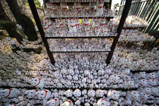 """Thousands of """"Maneki-neko"""", or beckoning cat, figurines are placed at the Goutokuji Temple in Tokyo, Wednesday, February 8, 2017. The figurines believed to bring good luck dedicated by visitors are placed around a statue of the goddess of mercy. (Photo by Shizuo Kambayashi/AP Photo)"""