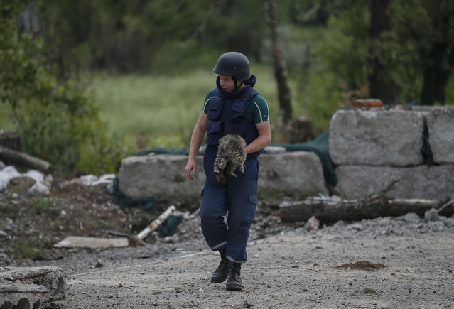 A sapper carries a cat to safety before remotely detonating the remains of a 80mm mortar shell in Semenovka, eastern Ukraine July 9, 2014. (Photo by Gleb Garanich/Reuters)