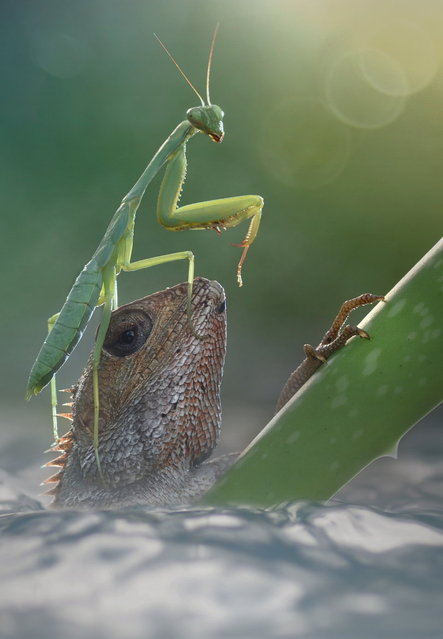 """""""Hold on"""". (Photo by Fahmi Bhs)"""