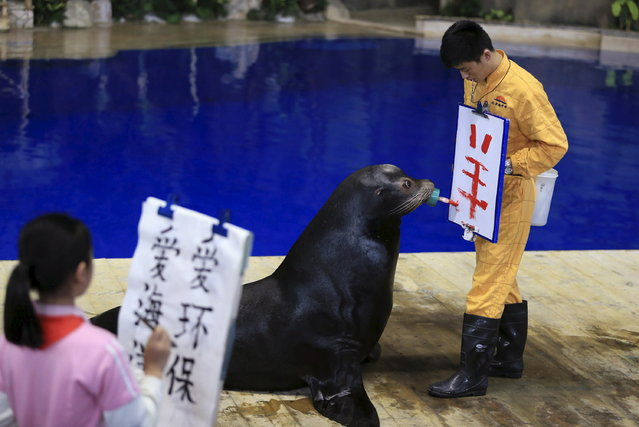 """A trained sea lion writes the Chinese character """"yang"""", which means """"goat"""" or """"sheep"""", on a board held by its trainer during a performance at the Beijing Aquarium, in Beijing, China April 23, 2015. (Photo by Reuters/Stringer)"""