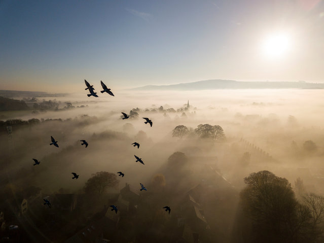 Habitat category winner. Brighter Skies on the Horizon (rock dove or feral pigeon) by Rich Bunce from Ilkley, West Yorkshire. (Photo by Rich Bunce/British Wildlife Photography Awards/PA Wire Press Association)