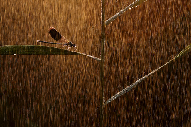 Other animals category winner: Golden rain by Norbert Kaszás (Hungary). (Photo by Norbert Kaszás/2019 Nature Photographer of the Year)