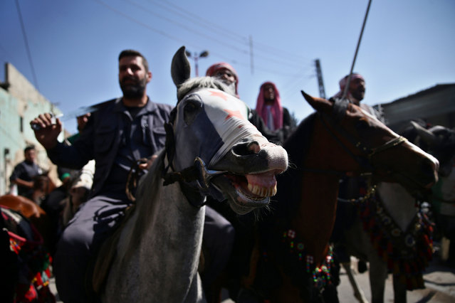 A horse, whose head is covered with a Syrian opposition flag, is pictured during a parade for Arabian horses in the rebel held area of Damascus's Eastern Ghouta suburbs, Syria May 30, 2016. (Photo by Bassam Khabieh/Reuters)