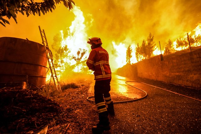 A Firefighter battles with a fire in Pampilhosa da Serra, central of Portugal, 18 June 2017. At least sixty two people have been killed in forest fires in central Portugal, with many being trapped in their cars as flames swept over a road on the evening of 17 June 2017. A total of 733 firefighters are providing assistance. (Photo by Paulo Novais/EPA)