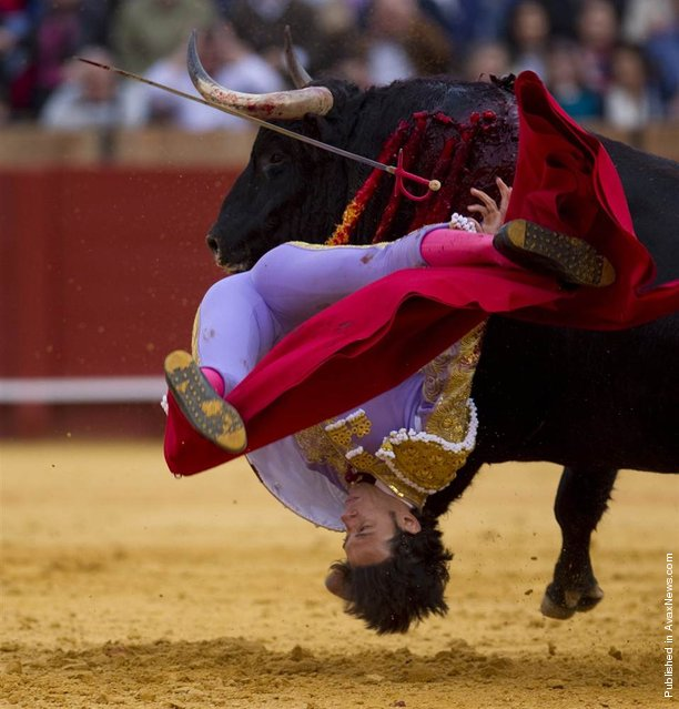 Spanish matador Antonio Nazare is hit by a bull in The Maestranza bullring in Seville, Spain, on April 18