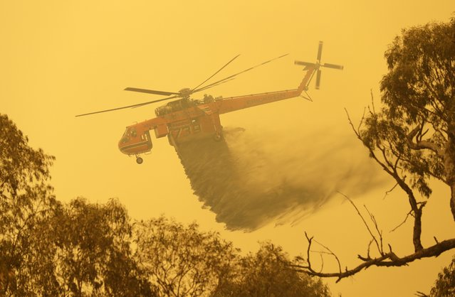 A helicopter drops water on a fire near Bumbalong, south of the Australian capital, Canberra, Saturday, February 1, 2020. The threat is posed by a blaze on Canberra's southern fringe that has razed more than 21,500 hectares (53,000 acres) since it was sparked by heat from a military helicopter landing light on Monday, the Emergency Services Agency said. (Photo by Rick Rycroft/AP Photo)