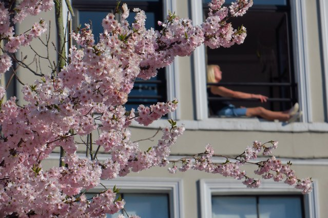 A woman reading a book at her window appears behind a blooming Japanese cherry tree in Lille, as a lockdown is imposed to slow the rate of the coronavirus disease (COVID-19) spread in France, March 24, 2020. (Photo by Pascal Rossignol/Reuters)