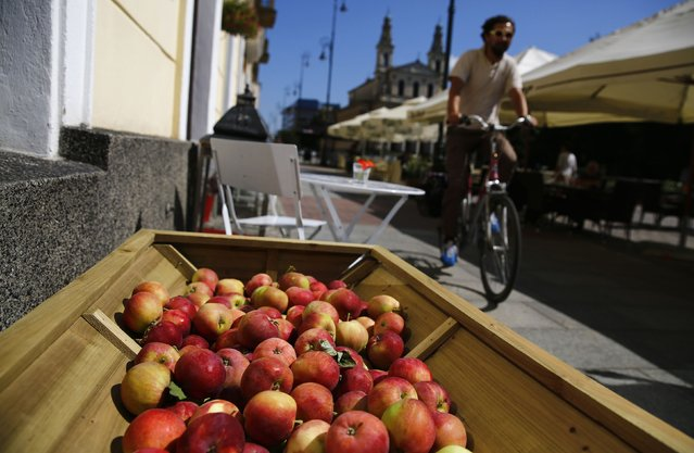 Apples are displayed outside a restaurant as a man rides past on a bicycle in central Warsaw August 20, 2014. According to a representative of the restaurant, they are giving away free apples to everyone to support Polish farmers in reaction to Russian food sanctions. EU fruit and vegetable growers will get financial aid of up to 125 million euros ($167 million) to help them cope with Russia's ban on most Western food imports, which has created a glut of produce in peak harvest time, the European Commission said on Monday. (Photo by Kacper Pempel/Reuters)