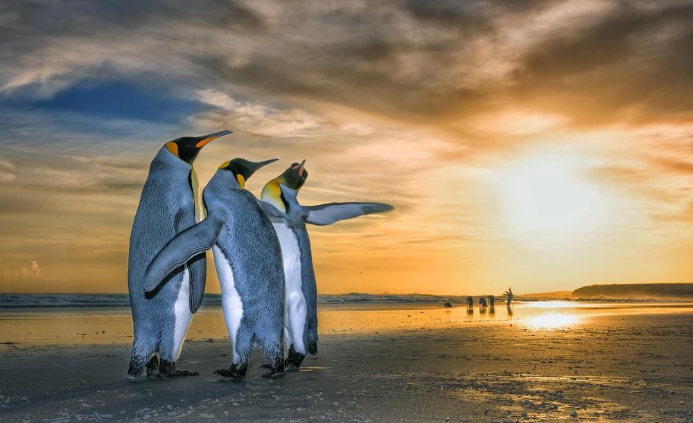 Penguins in Golden Sunrise
