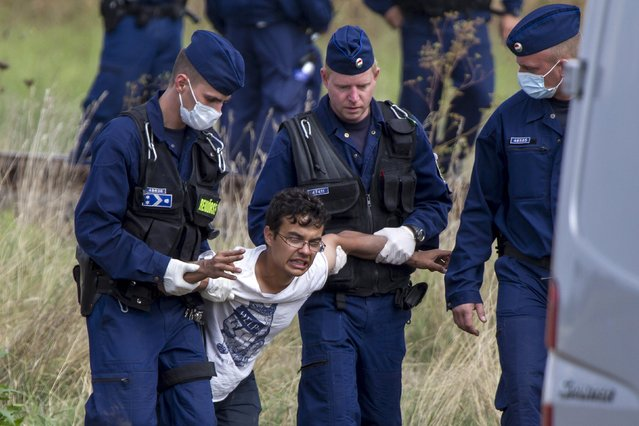 Hungarian policemen detain a migrant after he tried to escape from a collection point in Roszke village, Hungary, September 8, 2015. (Photo by David Balogh/Reuters)