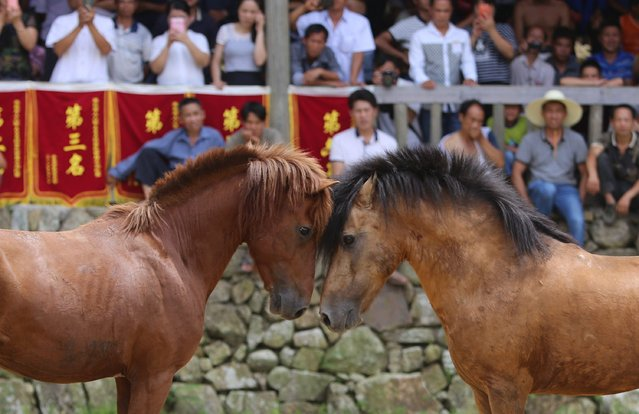 Two horses fight during a Xinhe Festival in Peixiu Village of Antai Township in Rongshui Miao Autonomous County on July 11, 2016 in Liuzhou, Guangxi Zhuang Autonomous Region of China. (Photo by VCG/VCG via Getty Images)
