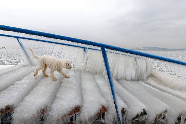 A dog walks on ice covering a stair normally used by bathers to enter and leave the water on the shore of Lake Balaton in Fonyod, 148 kms southwest of Budapest, Hungary, 26 February 2018, as extreme cold strengthened by high winds chills most of Hungary. (Photo by Gyorgy Varga/EPA/EFE)