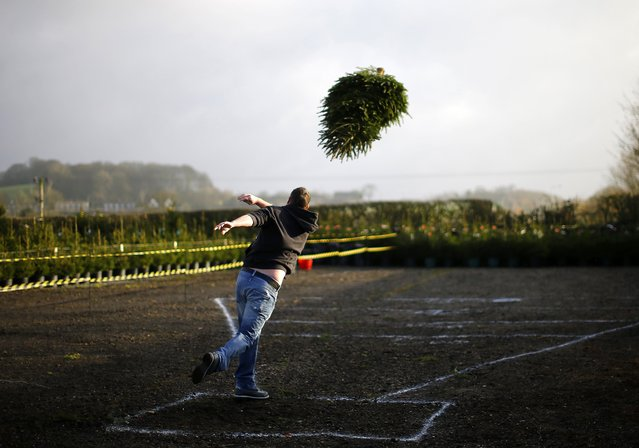 A competitor throws during the UK Christmas Tree Throwing Championships in Keele, central England , November 30, 2014. (Photo by Darren Staples/Reuters)