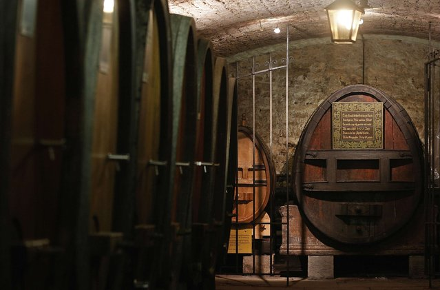 A barrel dating from 1472 (at rear) that used to contain the oldest wine in the world is seen in the wine cellar of the Strasbourg Hospital, in Strasbourg, January 21, 2015. (Photo by Vincent Kessler/Reuters)