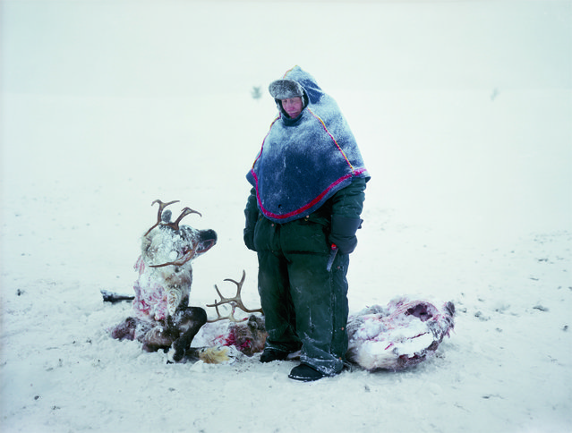 A Sami in Sweden mourns the loss of two reindeer that starved after locking horns in a fight for dominance. (Photo by Erika Larsen/National Geographic)