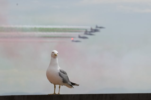 """A seagull looks on as the Italian three-color special air force acrobatic team """"Frecce Tricolori"""" flies over Rome and the Vatican Wednesday, June 2, 2021, as Italy celebrates the anniversary of its unification. (Photo by Andrew Medichini/AP Photo)"""