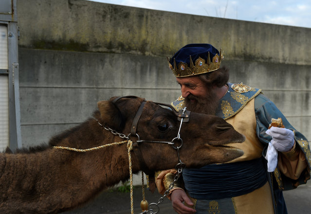 A man dressed as one of the Three Kings gives bread to a camel before the start of the Epiphany parade in Gijon, Spain January 5, 2017. (Photo by Eloy Alonso/Reuters)