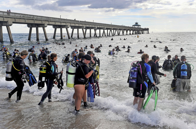 Divers enter the water in an attempt to break the world record for the largest underwater cleanup at the Deerfield Beach International Fishing Pier in Deerfield Beach, Fla., Saturday, June 15, 2019. The record was broken with 633 divers taking part in the record breaking dive. Guinness World Records adjudicator Michael Empric counted divers as they entered the water. (Photo by Mike Stocker/South Florida Sun-Sentinel via AP Photo)
