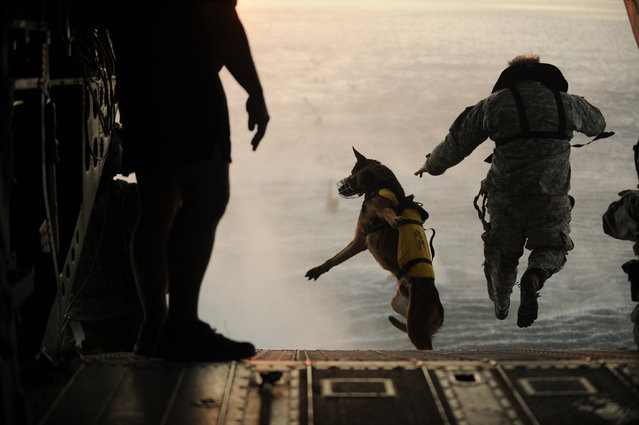 A U.S. Army soldier with the 10th Special Forces Group and his military working dog jump off the ramp of a CH-47 Chinook helicopter from the 160th Special Operations Aviation Regiment during water training over the Gulf of Mexico as part of exercise Emerald Warrior 2011, March 1, 2011. (Photo by Manuel J. Martinez/Reuters/U.S. Air Force)
