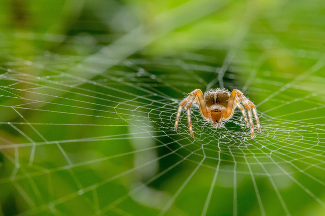 Hidden Britain category winner. Garden Spider by Alan Smith from Reading, Berkshire. (Photo by Alan Smith/British Wildlife Photography Awards/PA Wire Press Association)
