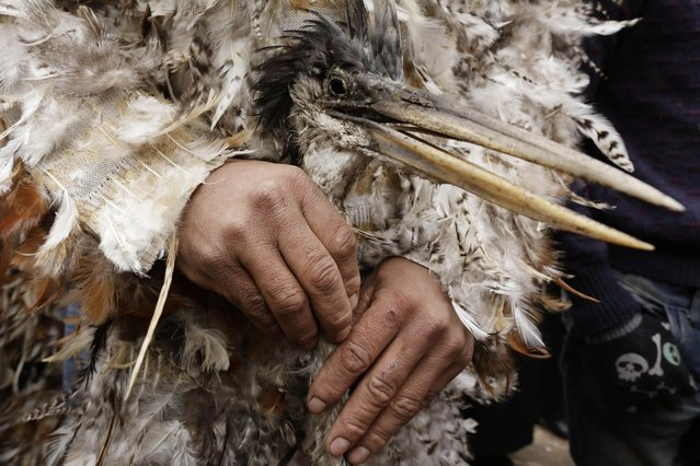 St. Francis Solano pledge Juan Ferreira, holds a cane with a heron head handle during a Mass marking the saint's feast day, in Emboscada, Paraguay, Friday, July 24, 2015. (Photo by Jorge Saenz/AP Photo)