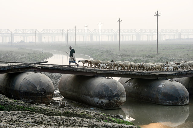A shepherd leads a flock of sheep on a pontoon bridge in Allahabad on November 26, 2019. (Photo by Sanjay Kanojia/AFP Photo)