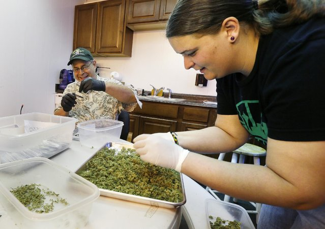"In this photo taken July 1, 2014, workers Kristi Tobias, right, and Bruce Cumming prepare packets of a variety of recreational marijuana named ""Space Needle"" at Sea of Green Farms in Seattle. (Photo by Ted S. Warren/AP Photo)"
