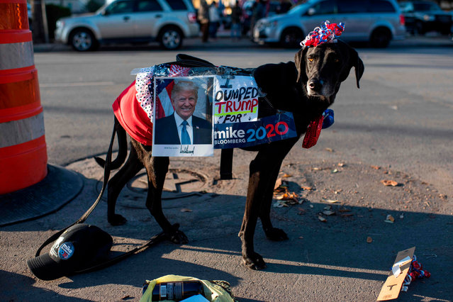 Yolanda Sutter dresses up her dog Star to show their support for Democratic presidential candidate Mike Bloomberg at the Viva Villa restaurant in San Antonio, Texas on January 11, 2020. Democratic presidential candidate Mike Bloomberg kicks off his Texas bus tour. (Photo by Mark Felix/AFP Photo)